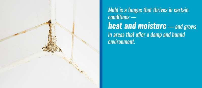 Remove Mold From Locker Room Showers - One Point Partitions